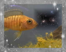 Uranus 39 aquarium fish in outer space astrodienst for Why do fish have mercury