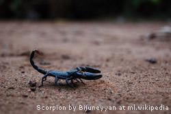 Scorpio - Astrodienst