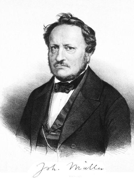 File:Johannes Peter Müller.jpg